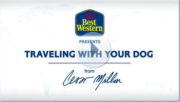 Pet Travel Tips from Cesar Millan
